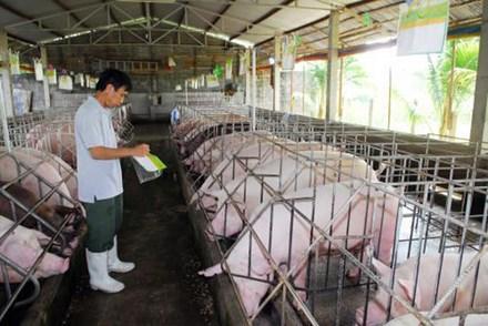 Giải cứu nông dân nuôi lợn: Bộ Tài chính, Công Thương vào cuộc - 1