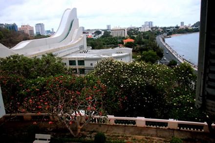 Rừng hoa sứ nơi vua Thành Thái bị giam lỏng nở hoa tuyệt đẹp - 3
