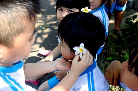 Rừng hoa sứ nơi vua Thành Thái bị giam lỏng nở hoa tuyệt đẹp - 9