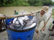 Thị trường - Tiêu dùng - Trung Quốc là nhà nhập khẩu cá tra lớn nhất của Việt Nam