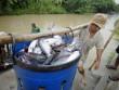 Trung Quốc là nhà nhập khẩu cá tra lớn nhất của Việt Nam