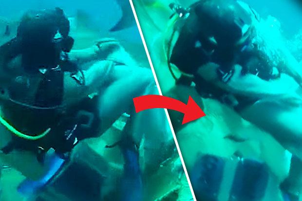 Video: Hãi hùng cảnh thợ lặn bị cá mập cắn vào chỗ hiểm - 1