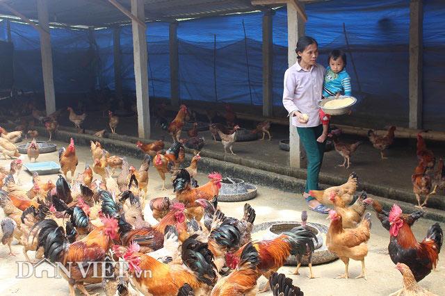 Chỉ 10 triệu đồng đầu tư được chuồng trại nuôi tới 2.000 con gà - 1