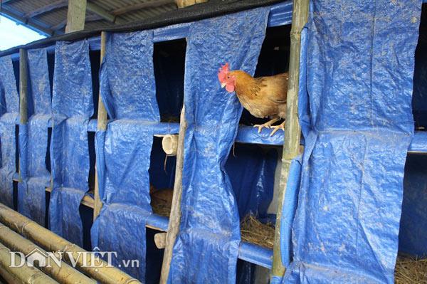 Chỉ 10 triệu đồng đầu tư được chuồng trại nuôi tới 2.000 con gà - 3
