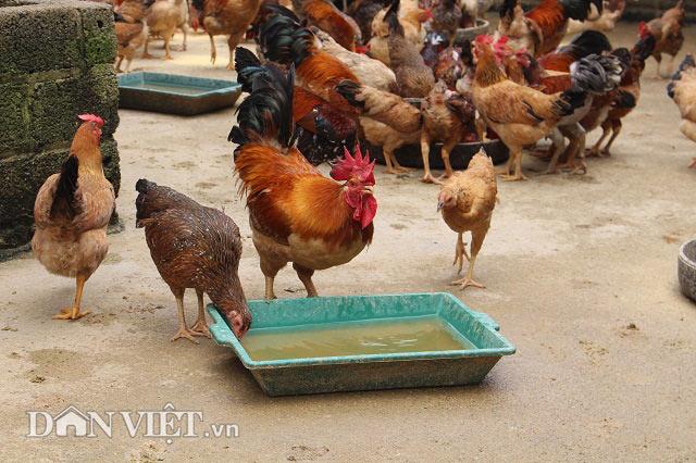 Chỉ 10 triệu đồng đầu tư được chuồng trại nuôi tới 2.000 con gà - 7