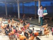 Thị trường - Tiêu dùng - Chỉ 10 triệu đồng đầu tư được chuồng trại nuôi tới 2.000 con gà