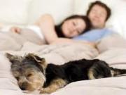 Sức khỏe đời sống - Ngủ cùng vật nuôi gây hại cho sức khỏe thế nào?