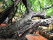 Khám phá ngôi đình có nhiều cây cổ thụ quý giữa lòng Thủ đô