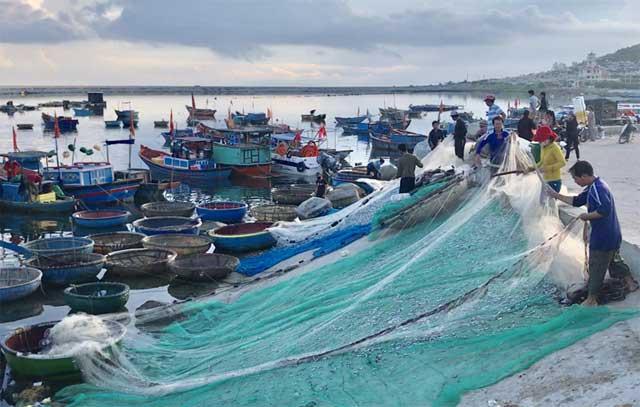Quảng Ngãi: Chèo thúng đi đánh cá cơm quế kiếm tiền triệu/buổi - 1