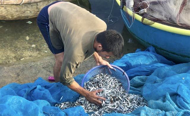 Quảng Ngãi: Chèo thúng đi đánh cá cơm quế kiếm tiền triệu/buổi - 4