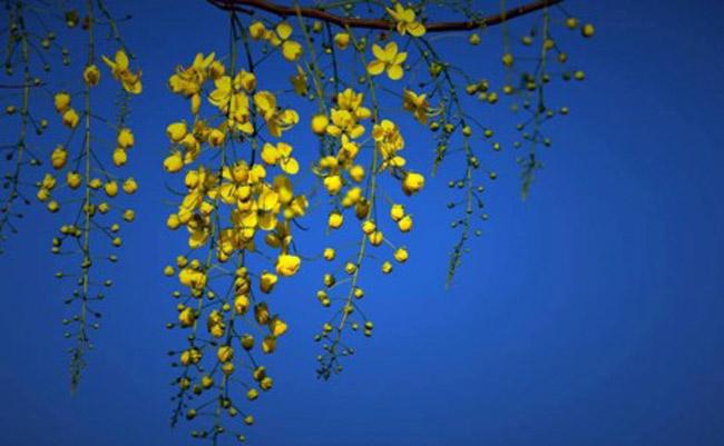 Sơn Trà đẹp ngỡ ngàng trong khoảnh khắc giao mùa - 8