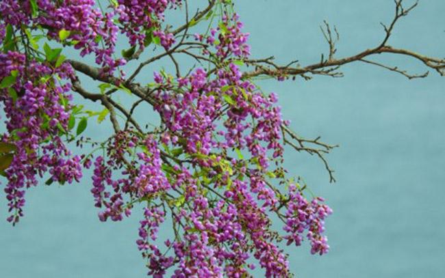 Sơn Trà đẹp ngỡ ngàng trong khoảnh khắc giao mùa - 6