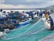 Thị trường - Tiêu dùng - Quảng Ngãi: Chèo thúng đi đánh cá cơm quế kiếm tiền triệu/buổi