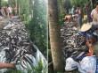 Điều tra vụ cá lóc chết hàng loạt, nghi bị đầu độc ở Kiên Giang