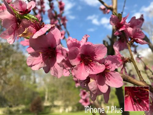 So sánh ảnh chụp từ camera Galaxy S8+ với iPhone 7 Plus - 3