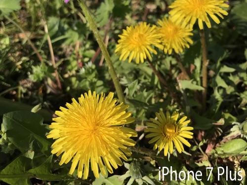 So sánh ảnh chụp từ camera Galaxy S8+ với iPhone 7 Plus - 19