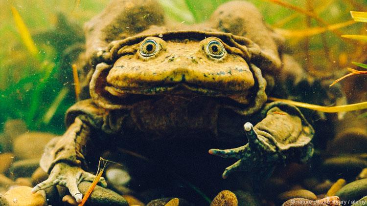 """Kinh hoàng sinh tố ếch tươi giúp quý ông mãnh liệt trong """"chuyện ấy"""" - 1"""