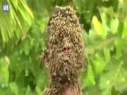 """Phi thường - kỳ quặc - Để 60.000 con ong bâu kín mặt """"cho dễ chịu"""""""
