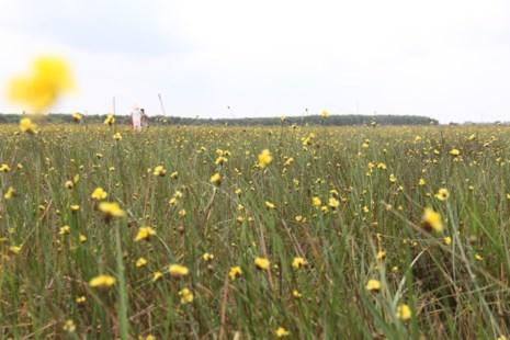 Tháng 5, đến Tràm Chim ngắm hoa lạ - 3