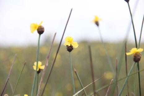 Tháng 5, đến Tràm Chim ngắm hoa lạ - 2