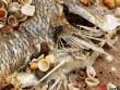 Chưa cho khai thác hải sản tầng đáy sau sự cố Formosa