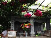 """Tin tức trong ngày - Ông lão """"soái ca"""" dựng cả khu vườn tình yêu bên mộ vợ"""