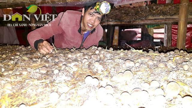 Trại nấm sạch lớn nhất Kon Tum, thu lãi 40 triệu/tháng - 1