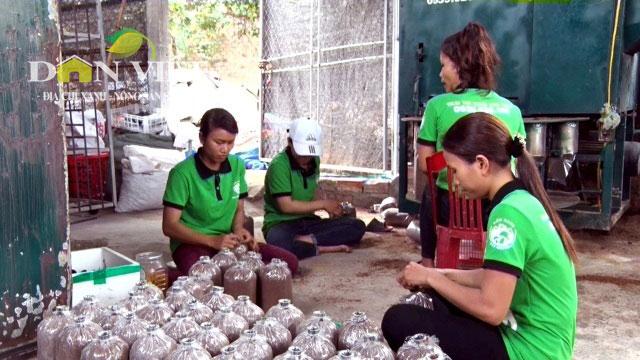 Trại nấm sạch lớn nhất Kon Tum, thu lãi 40 triệu/tháng - 2