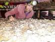 Trại nấm sạch lớn nhất Kon Tum, thu lãi 40 triệu/tháng