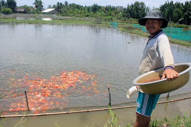 """Lão nông canh con nước """"độc"""" nuôi cá cảnh, thu cả trăm triệu/tháng - 1"""