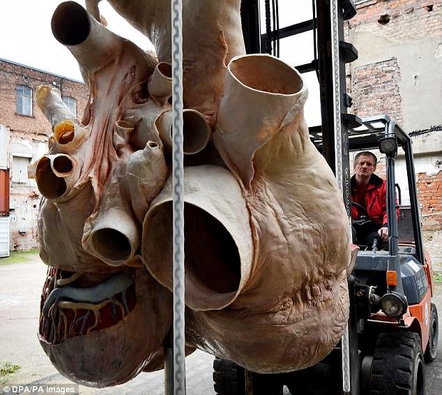 Ngắm quả tim cá voi khổng lồ to như ngựa ở Canada - 2