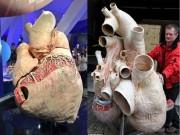 Thế giới - Ngắm quả tim cá voi khổng lồ to như ngựa ở Canada