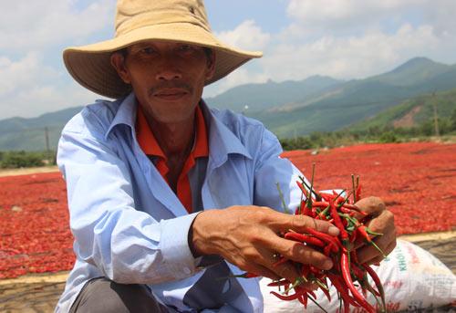 Xót xa giá ớt đang 50.000 rớt còn 3.000 đồng/kg: Lại do Trung Quốc? - 2