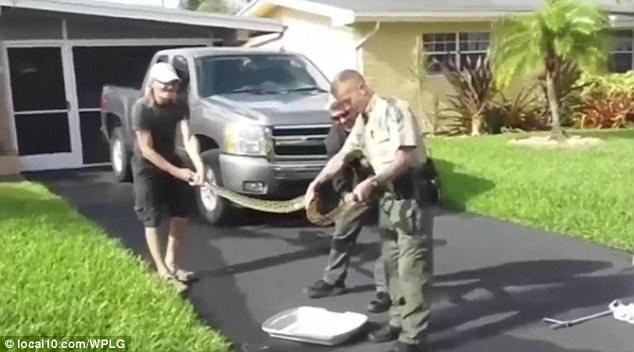 Mỹ: Chiến đấu với trăn hung tợn bằng chổi và vỏ gối - 2