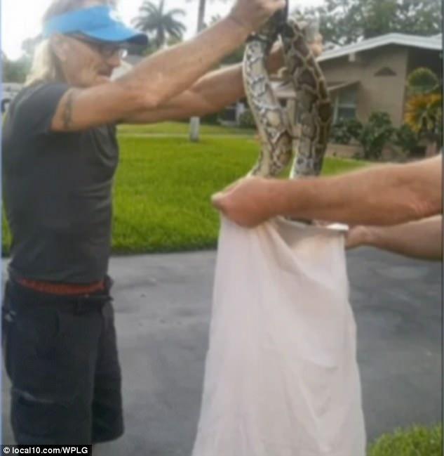 Mỹ: Chiến đấu với trăn hung tợn bằng chổi và vỏ gối - 4