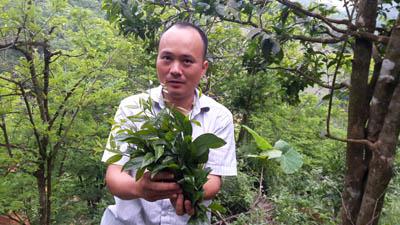 Trồng cây tiền tỷ: Chỉ 1 cây rau sắng rừng thu 3 triệu đồng ngon ơ - 3