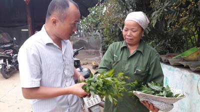 Trồng cây tiền tỷ: Chỉ 1 cây rau sắng rừng thu 3 triệu đồng ngon ơ - 4