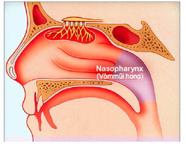 Lo ngay ngáy khi biết nguyên nhân và dấu hiệu ung thư vòm họng - 2