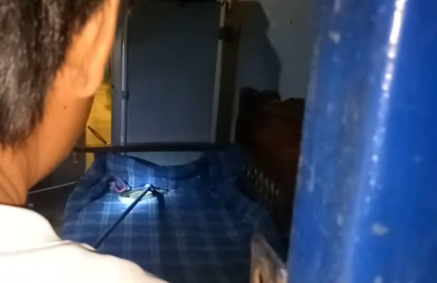 Thái Lan: Đang xem TV, thấy rắn hổ mang bò dưới cổ - 1