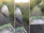 Thế giới - Mỹ: Cá sấu khổng lồ hung hãn lao lên xuồng bay