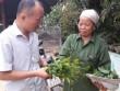 Trồng cây tiền tỷ: Chỉ 1 cây rau sắng rừng thu 3 triệu đồng ngon ơ