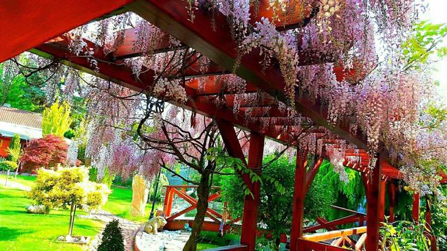 Ngắm khu vườn đẹp như thiên đường của mẹ Việt ở Séc - 2
