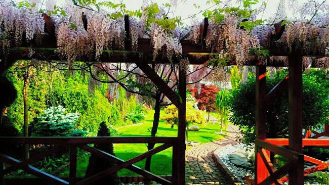 Ngắm khu vườn đẹp như thiên đường của mẹ Việt ở Séc - 9