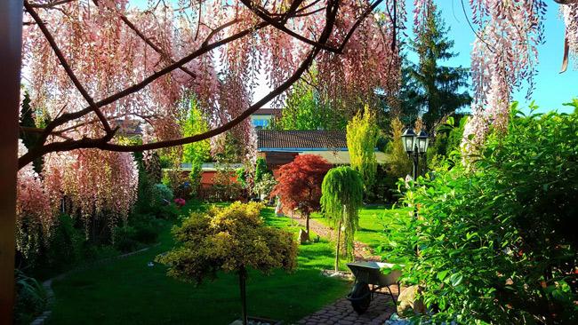Ngắm khu vườn đẹp như thiên đường của mẹ Việt ở Séc - 6
