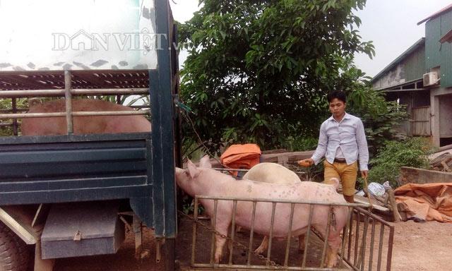 1 triệu tấn lợn Việt Nam sẽ xuất khẩu chính ngạch sang Trung Quốc - 1