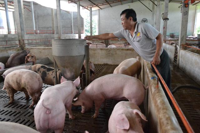 1 triệu tấn lợn Việt Nam sẽ xuất khẩu chính ngạch sang Trung Quốc - 2