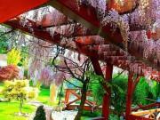 Ngắm khu vườn đẹp như thiên đường của mẹ Việt ở Séc