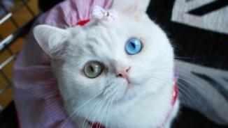 Kỳ lạ, mèo mất tích gọi điện về cho chủ nhân?