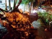 Tin tức trong ngày - Bất ngờ khi thấy cây xanh bật gốc đè ô tô trên phố SG