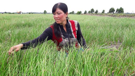 Trồng cây tiền tỷ: Nghề trồng kiệu thu lãi 200-300 triệu đồng/ha - 1
